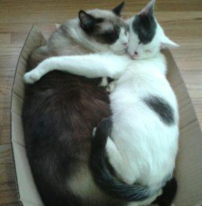 gina cats